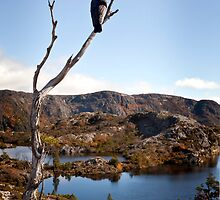 Currawong View by Karen Scrimes