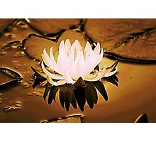 *Gilded Lily* Photographic Print
