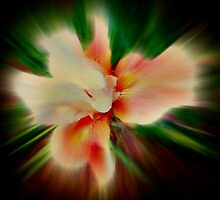 Orchid #1 by Scott Mitchell