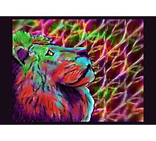 Colorful Lion Photographic Print