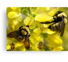 BUMBLE BEES AND HONEY BEES Canvas Print