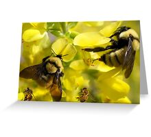 BUMBLE BEES AND HONEY BEES Greeting Card