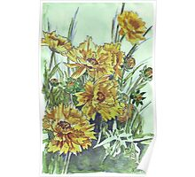 Bright and cheery Coreopsis Poster