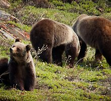 Grizzly 1 by Miles Glynn