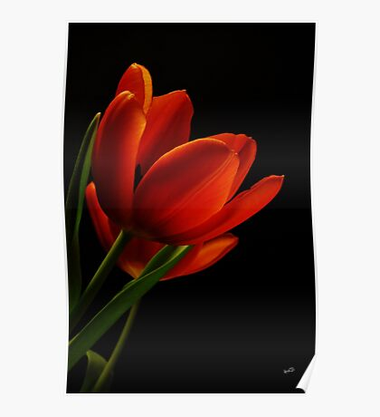 The Tulips  Poster