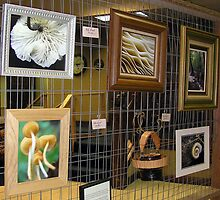 Photo Wall of Art Exhibit by Carla Wick/Jandelle Petters