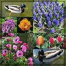 Flowers and Feathers - Keukenhof Collage by BlueMoonRose
