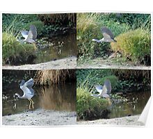 Blue Heron  in Flight Collage Poster