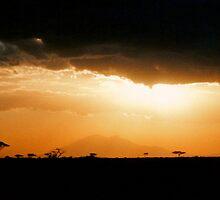 Africa by Jennifer Sumpton