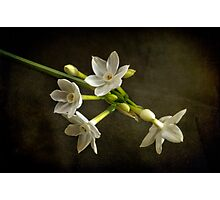 The very first Jonquil of the season Photographic Print