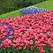 All Glorious Gardens - Big Colour