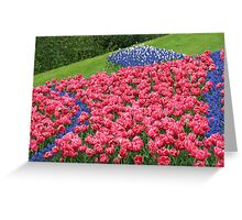 Hillside Tulip Display - Keukenhof Gardens Greeting Card