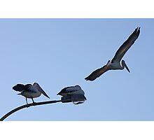 Pelican Lamp Photographic Print