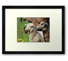 Spring Meadow & Sheep Framed Print