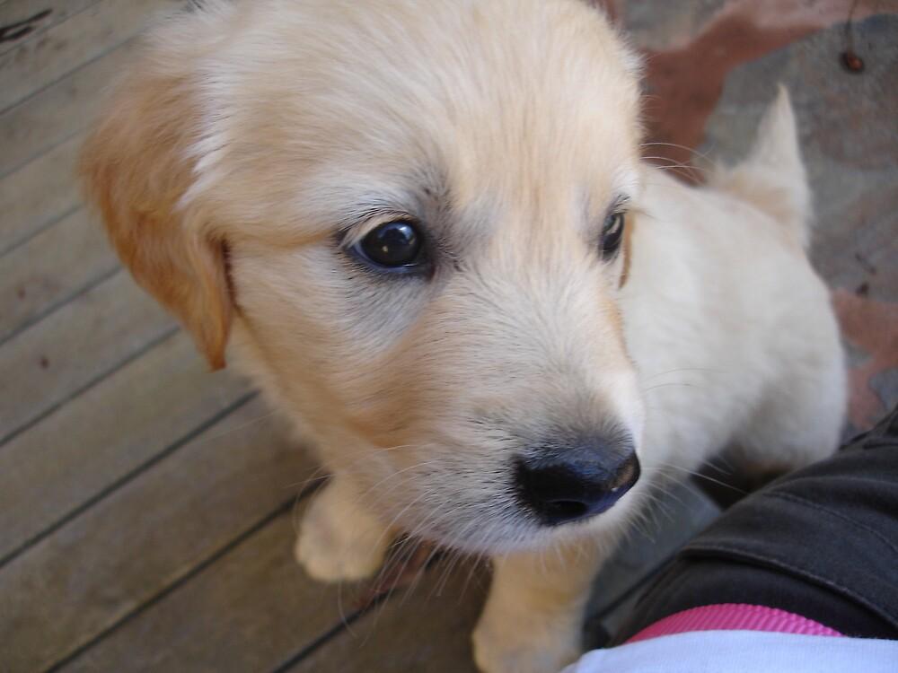 Casper cute! by Belinda Bennett