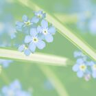 Forget Me Not by Diane Johnson-Mosley