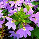 Pretty In Purple by Rocksygal52