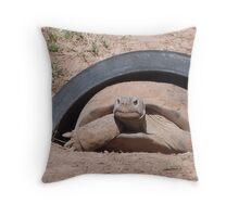 Bolson Tortoise of the Chihuahuan Desert Throw Pillow