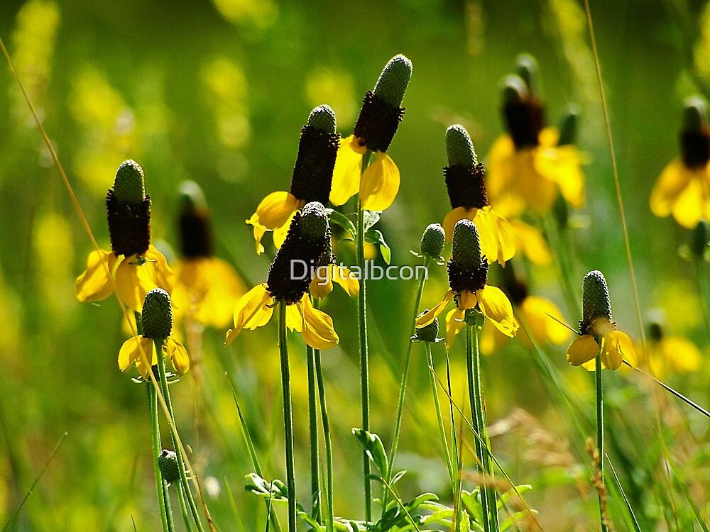 Yellow Prairie Coneflower - Ratibida columnaris by Digitalbcon