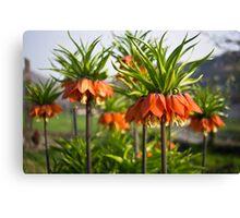 Fritillaria Canvas Print