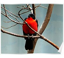 Bird in tree Poster