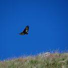 Eagle in flight by Anita Deppe