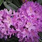 Textured Pink Rhododendron by LoneAngel