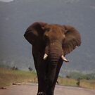 Elephants have the right of way.... by Anita Deppe