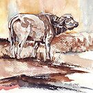 African Buffalo by Maree Clarkson