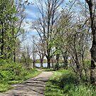 Lake Milton Trail by Monnie Ryan