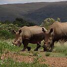 White Rhinos by Anita Deppe