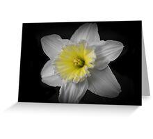 Midnight Daffodil  Greeting Card