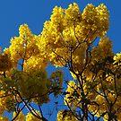 Blossoms Of The Spring Tree - Flores Del Arbol De La Primavera by Bernhard Matejka