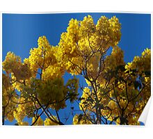 Blossoms Of The Spring Tree - Flores Del Arbol De La Primavera Poster