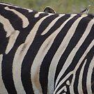 Zebra, very close up by Anita Deppe