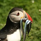 Puffin by AeronJohn