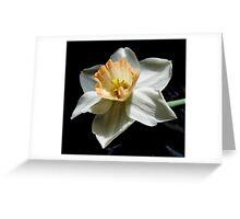 Daffodil and  Black Satin Greeting Card