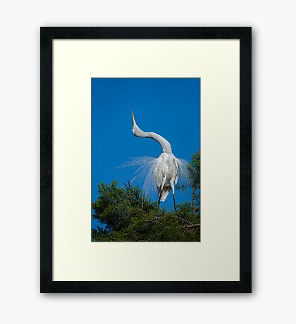 Salute to a Loved One Framed Print