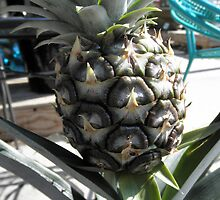 Pine apple by ack1128