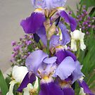 Purple bunch by Maria1606