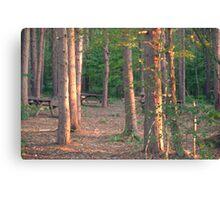 Woodland dusk Canvas Print
