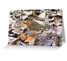 Red robin Greeting Card