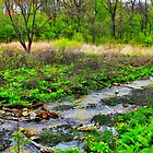 Scuppernong Springs In April by EBArt