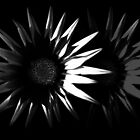 Abstract Flower, Black and White 5/5 by Mark Battista