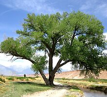 Cottonwood By The River by marilyn diaz