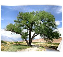 Cottonwood By The River Poster