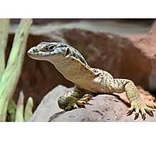 Monitor lizard Photographic Print