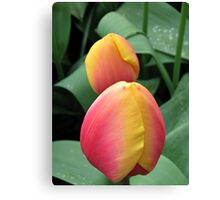 Tender Tulips Canvas Print