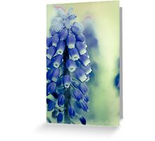 Grape Hyacynths in Blue Greeting Card