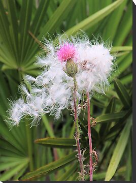 Horrible Thistle, Beginning and Ending by Rosalie Scanlon